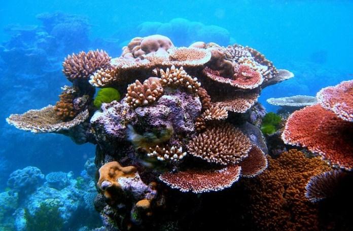 Marea-Barieră-de-Corali-Australia