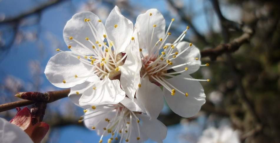 curarsi con la naturopatia