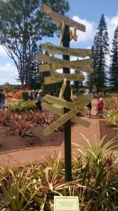 Pineapple Garden