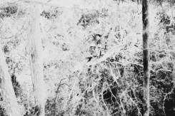 ämblikuvõrk