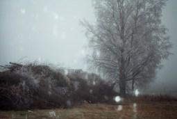photo31_31