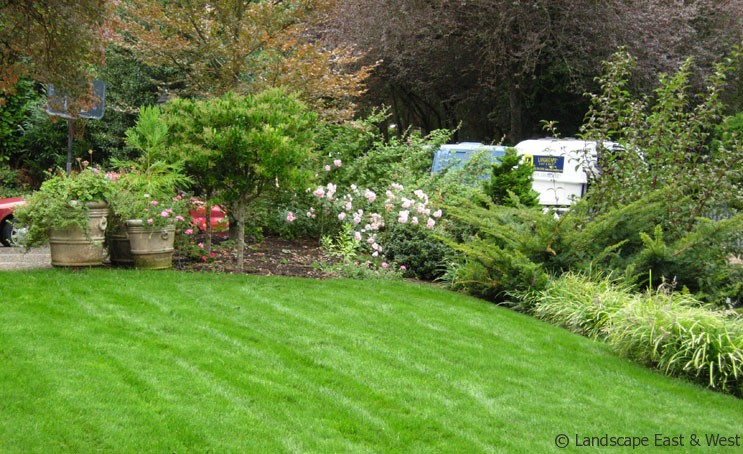 Landscaping Maintenance Tips 3 Easygoing Ground Cover Plants
