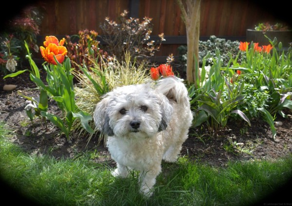 pet-friendly portland landscaping