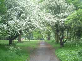 Hawthorn Beckenham Place