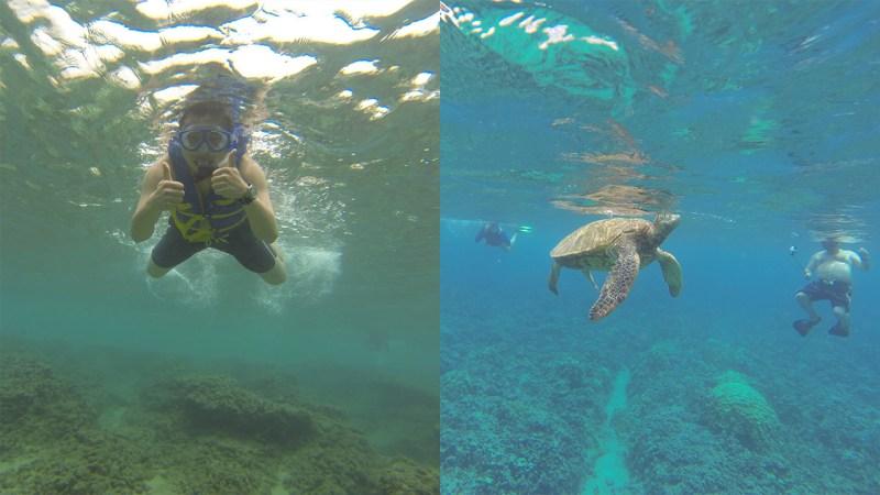 Maui sea turtle snorkel
