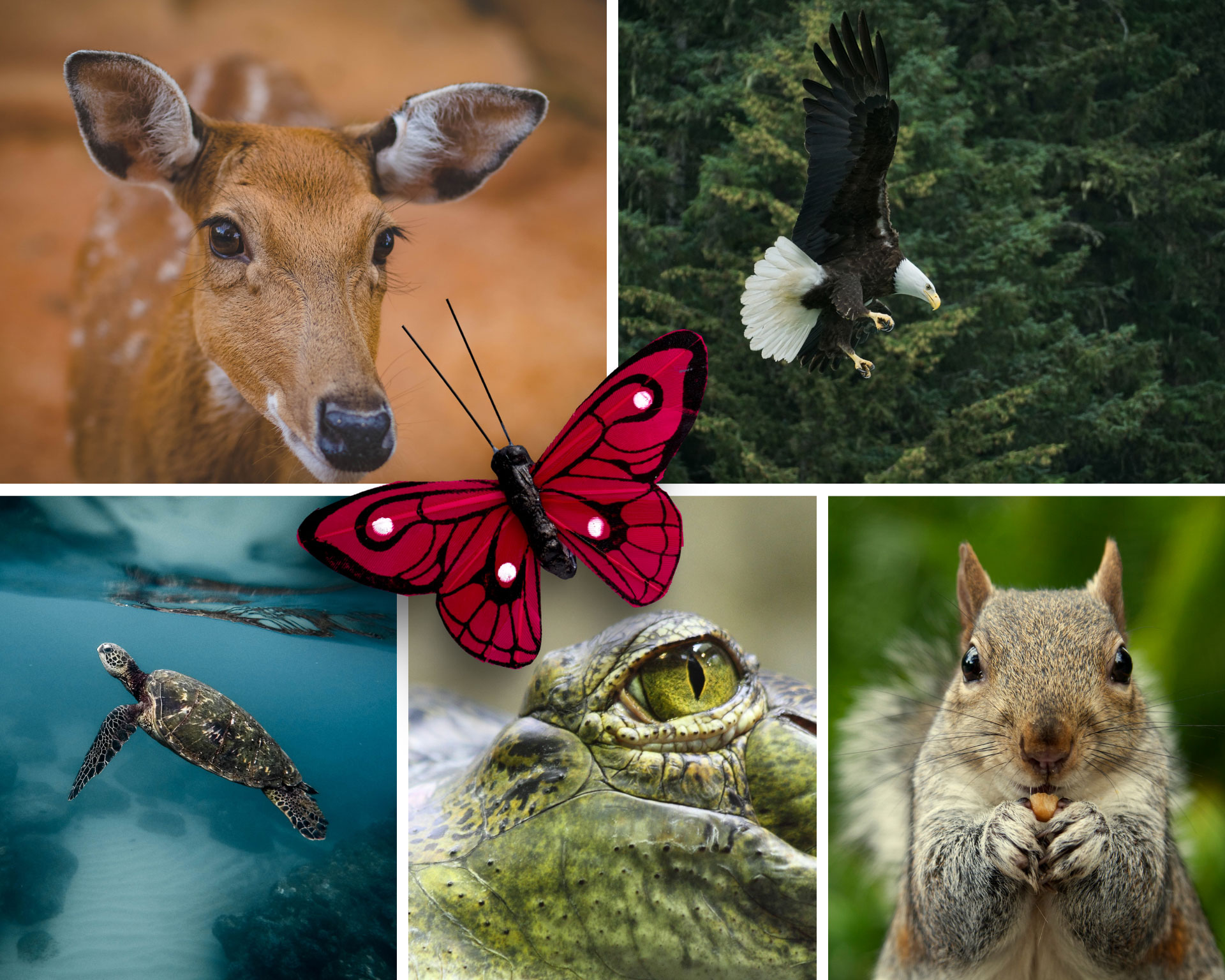 Wildlife 101: Feathers & Scales