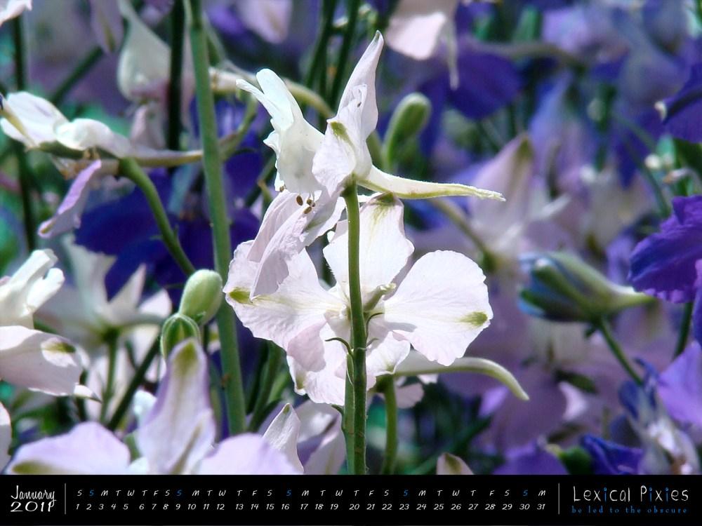 Desktop Wallpaper Calendar: 2011 Nature Theme: Flowers (1/6)