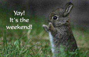 weekend_bunny