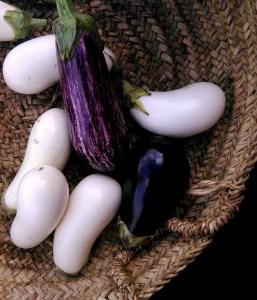 eggplant - Copy