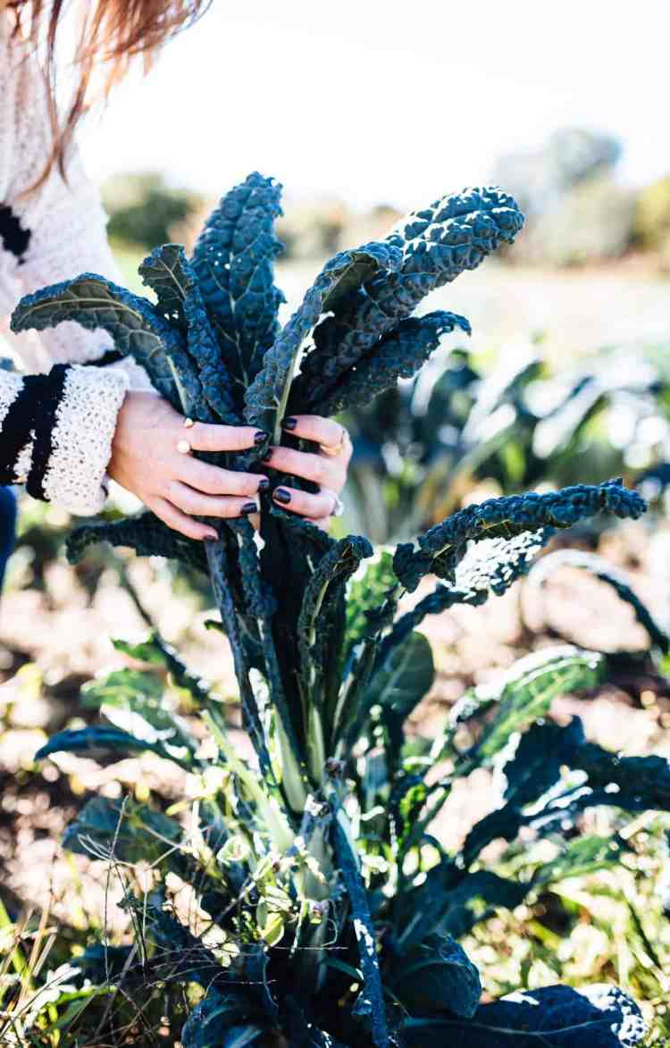 Kale presented as easy vegetables to grow.