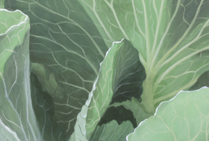 Closeup of cabbage leaves