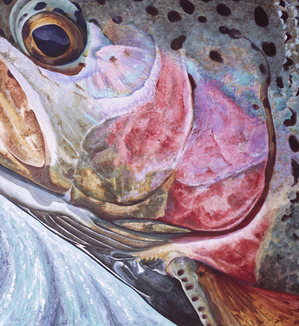 Large painting of the side of a rainbow trout head
