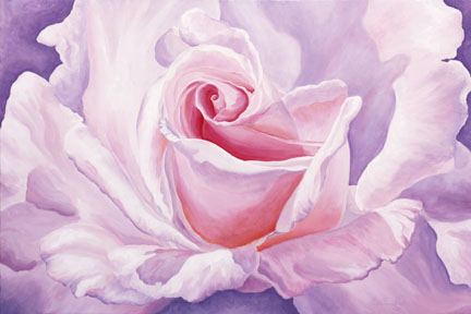 A rose unfolding in pinks and lavendars with a hint of orange