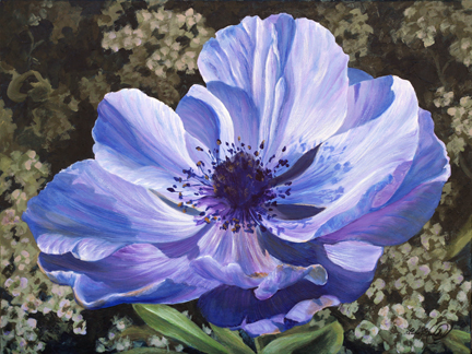 Blue anemone surrounded by alyssum