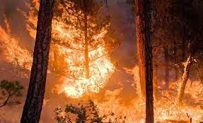 القيروان: السيطرة على الحريق في قمة جبل السرج