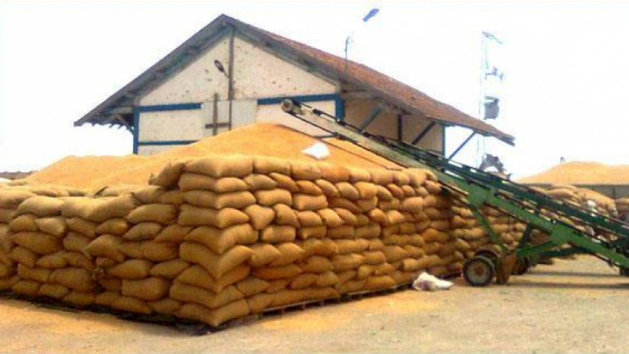 محمد رجايبية: قطاع الحبوب يحتاج عدّة إصلاحات