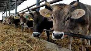 تطاوين: مربو الماشية يتذمرون من الجفاف وأزمة الاعلاف ويطالبون بمقاومة كل أشكال الفساد المضرة بالقطاع