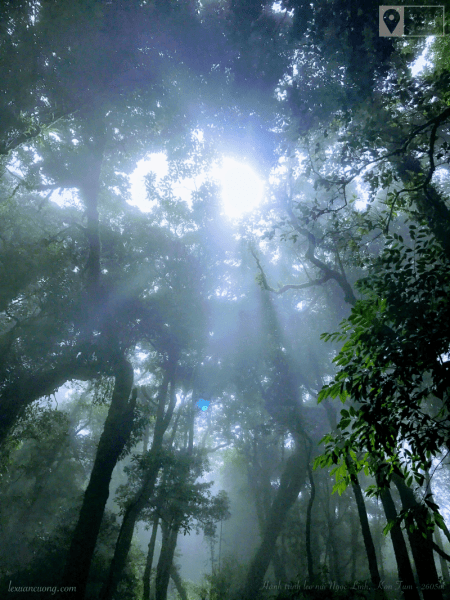 Light through the magical canopy of the Jade Forest.