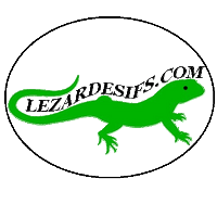 Lezardesifs spécialiste vignette assurance voiture personnalisée