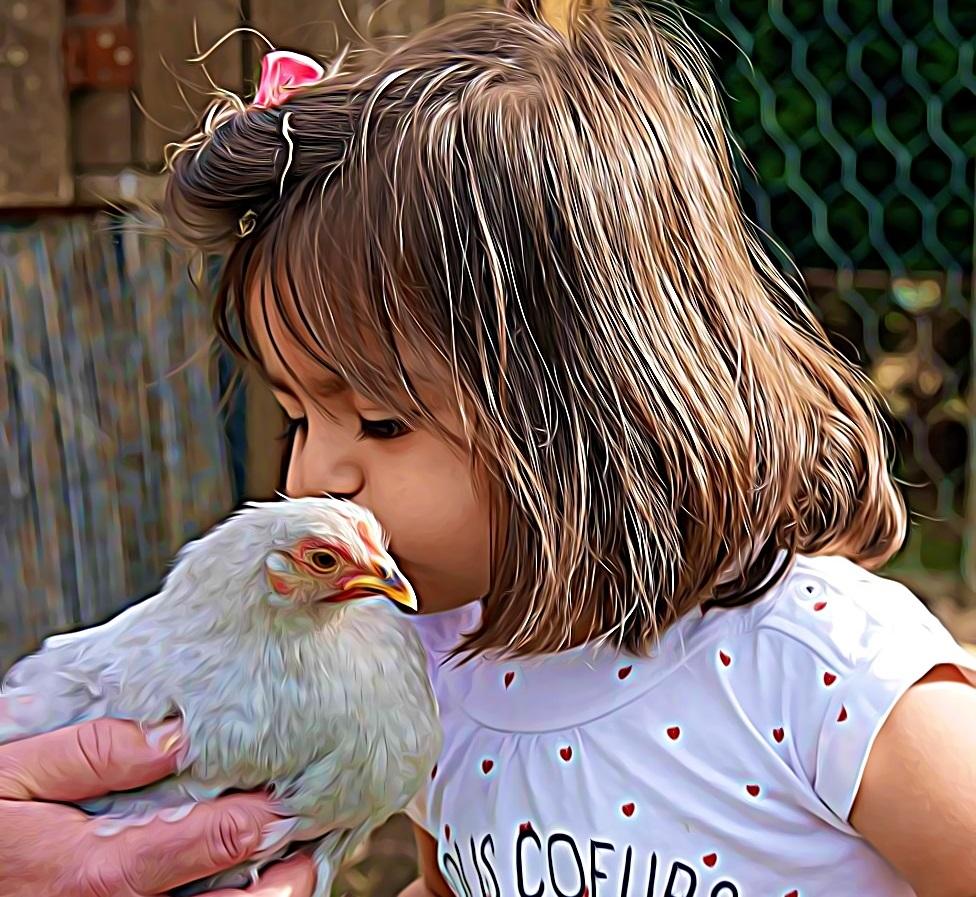 Des poules chics, en France