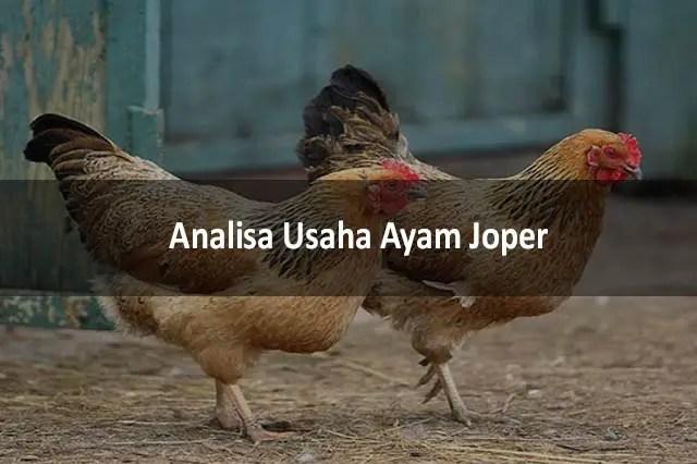 Analisa Usaha Ayam Joper