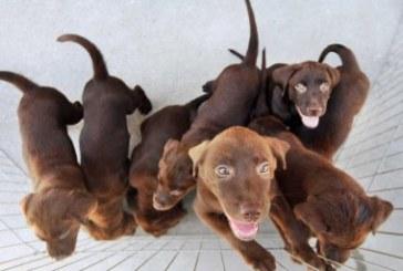 Vereador de Porto Alegre quer obrigar famílias a adotarem cães e gatos