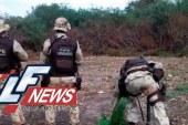 Polícia encontra mais de 159 mil pés de maconha após denúncia anônima