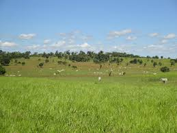 Bandidos furtam vacas, abatem dentro de fazenda e levam carne