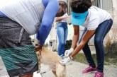 Com mais de 80% dos animais vacinados, imunização contra a raiva continua em Lauro de Freitas