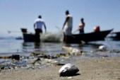 Bahia Pesca divulga novos locais de cadastramento de pescadores afetados pelo óleo