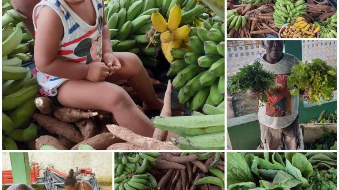 Que bacana! Em ato de solidariedade contra o COVID-19, MST doa cerca de 12 toneladas de alimentos na Chapada Diamantina