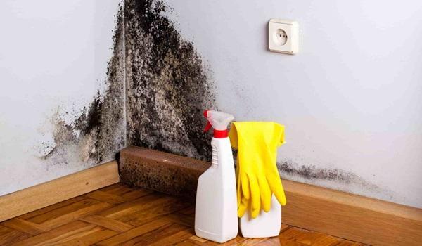 Inverno e umidade: confira cinco dicas para evitar mofo e prevenir doenças respiratórias