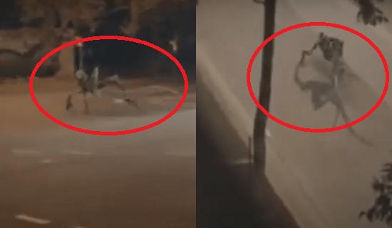 Fim dos tempos ou fake news? Vídeo de 'monstro' circulando em ruas no Sul da Bahia viraliza; assista