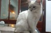 Brasil registra primeiro caso confirmado de gato com coronavírus