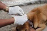CCZ de Lauro de Freitas realiza ações de combate ao Aedes Aegypti, teste de Leishmaniose e vacinação animal neste sábado (08)