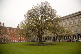 Dublin - Parc du Trinity College