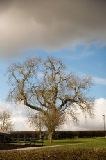 Newgrange - un arbre