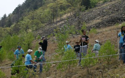 Ecological Succession at the Lehigh Gap