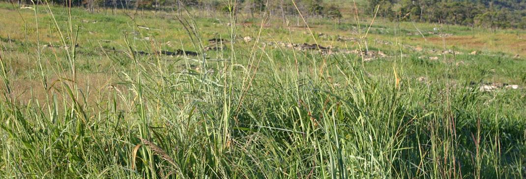 Watching Grass Grow II
