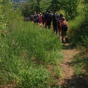 Young Ecologists Summer Camp