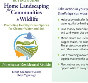 Native Plant Buying Guide