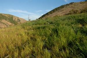 Lehigh Gap Restoration Hike