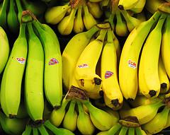 Bananne