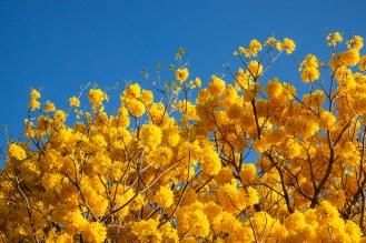 Explosión de amarillo en el cielo