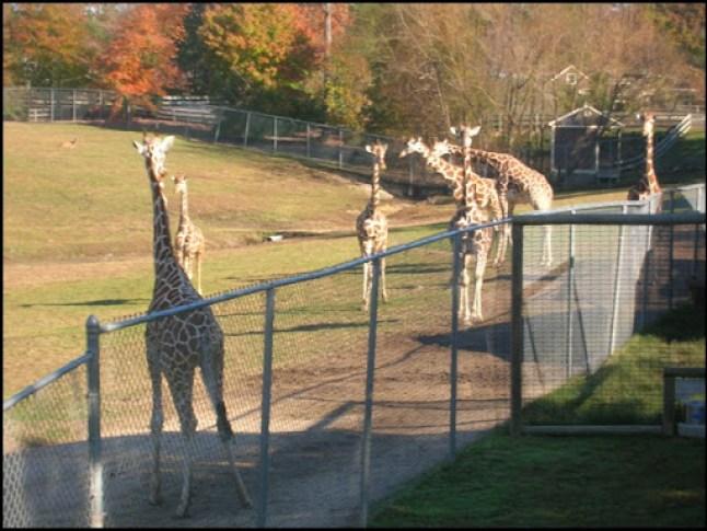 Richmond Metro Zoo 3rd Grade MES Field Trip 066