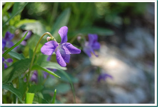 Violets and Leaves profile