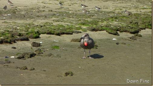 Birding Clamming_028