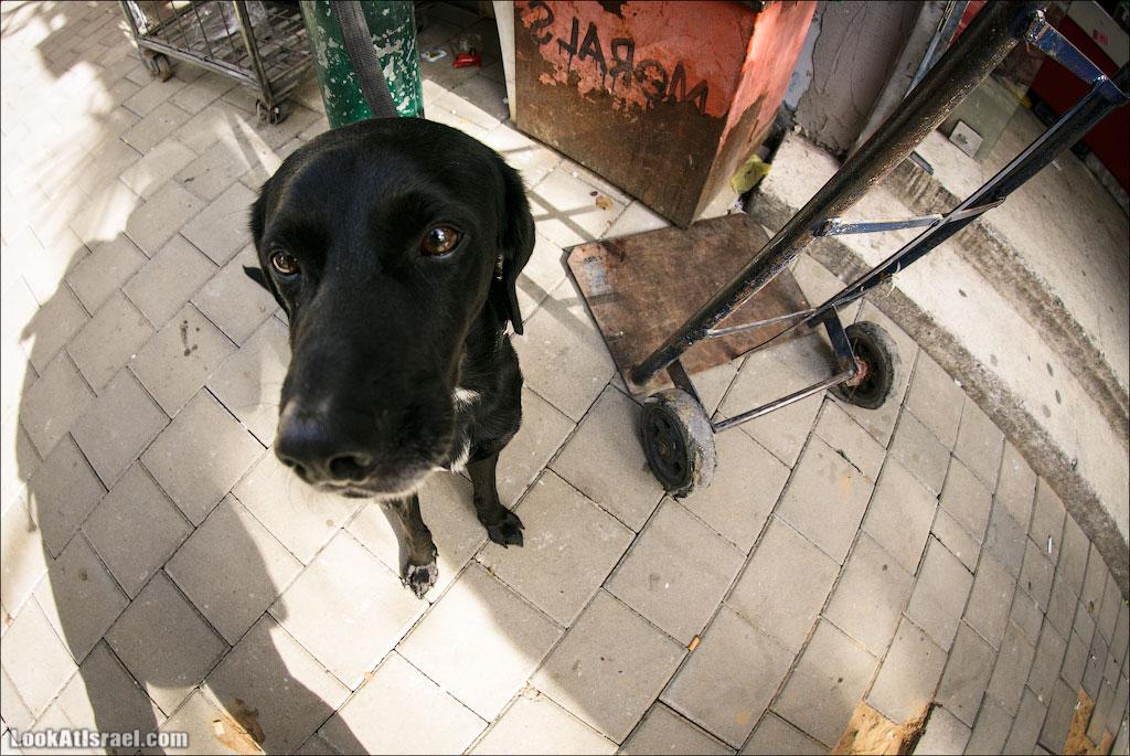 LookAtIsrael.com - Фото путешествия по Израилю | Портреты собак Тель Авива