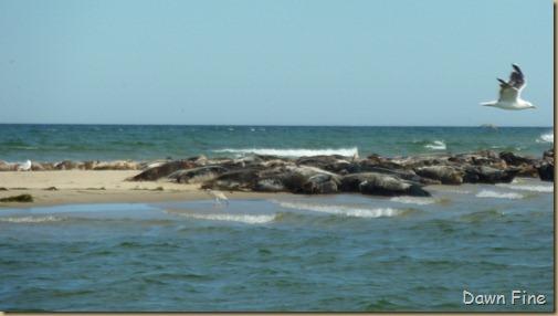Cape Cod_076
