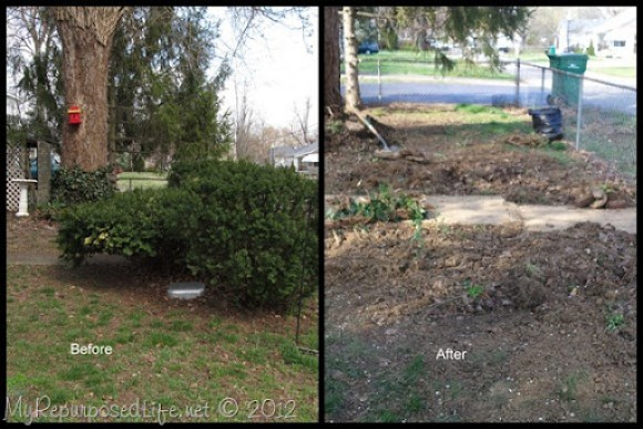 bushes before-after